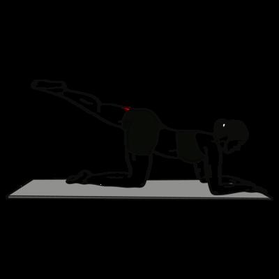 Beinrückheben einbeinig im Unterarmstütz Übung - Richtige Ausführung