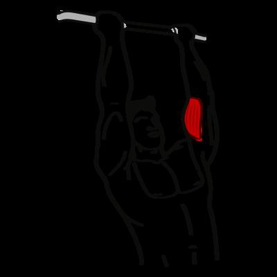 Klimmzug mit engem Untergriff Übung - Richtige Ausführung