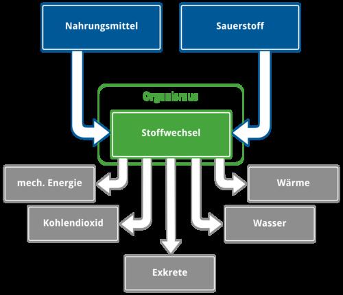 Stoffwechsel des menschlichen Koerpers - Aufnahme und Abgabe der Energie
