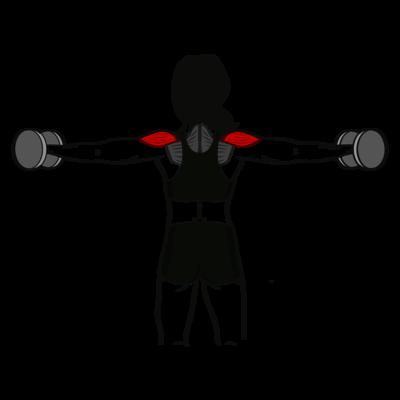 Seitheben beidarmig Übung - Richtige Ausführung
