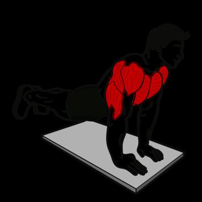 Trizeps-Liegestütz Übung - Richtige Ausführung