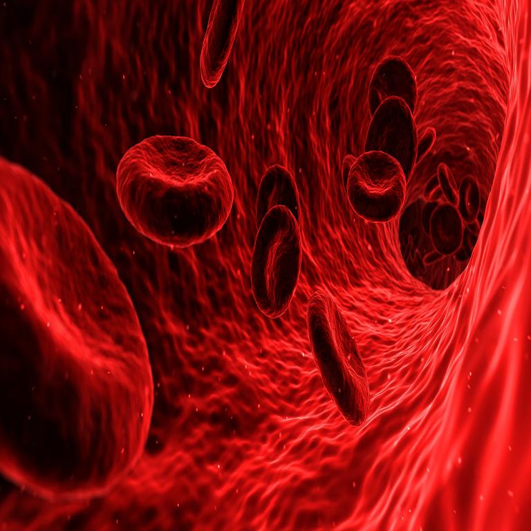 Enzyme - rote Blutkörperchen