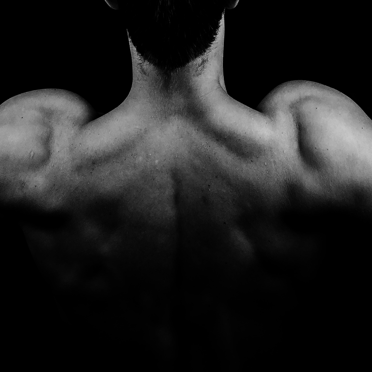 80-20.fit: Wichtige Muskeln für das Kraft- und Ausdauertraining