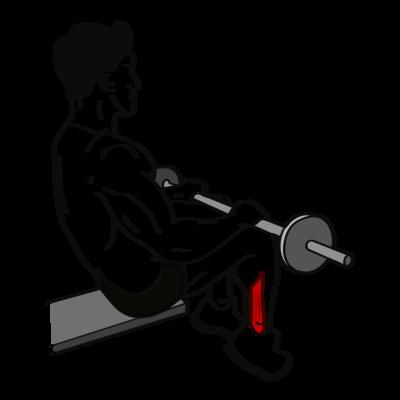 Wadenheben im Sitzen Übung - Richtige Ausführung
