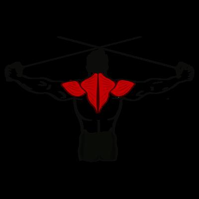 Reverse Flys stehend beidarmig Seilzug Übung - Richtige Ausführung