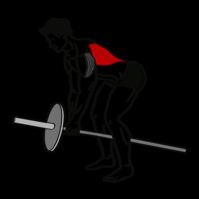 Rudern mit der T-Stange Übung - Richtige Ausführung