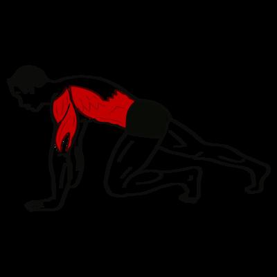 Mountain Climber Übung - Richtige Ausführung