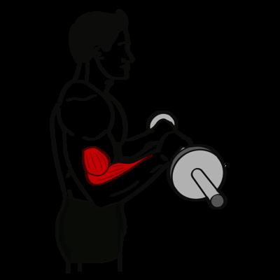 Unterarm-Curl Übung - Richtige Ausführung