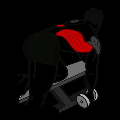 Rudern einarmig Kurzhantel Übung - Richtige Ausführung