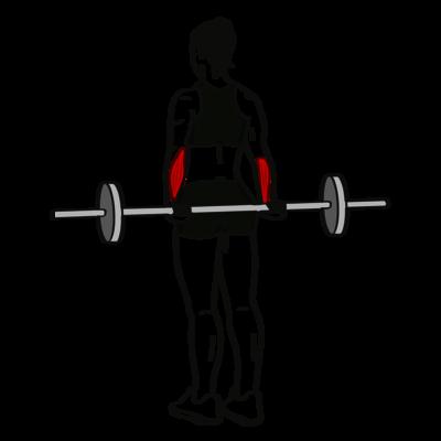Handgelenk-Curl Übung - Richtige Ausführung