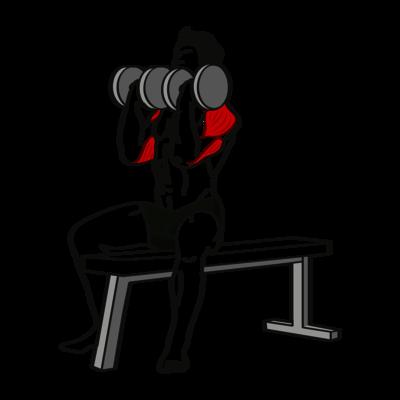 Arnold Press Übung - Richtige Ausführung